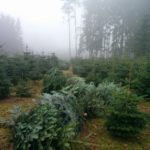 Bäume aus Mudau